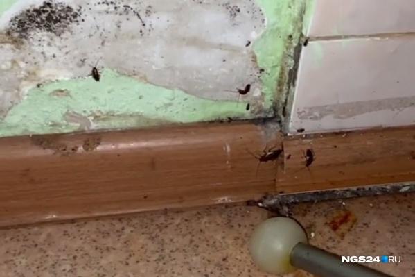 Пациенты жалуются на тараканов, а в больнице говорят, что мамы сами способствуют их увеличению — хранят продукты в тумбочках