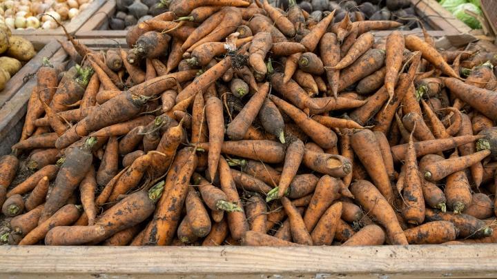 В Зауралье подскочили цены на морковь. Экс-сенатор объяснил, почему она стала дороже бананов