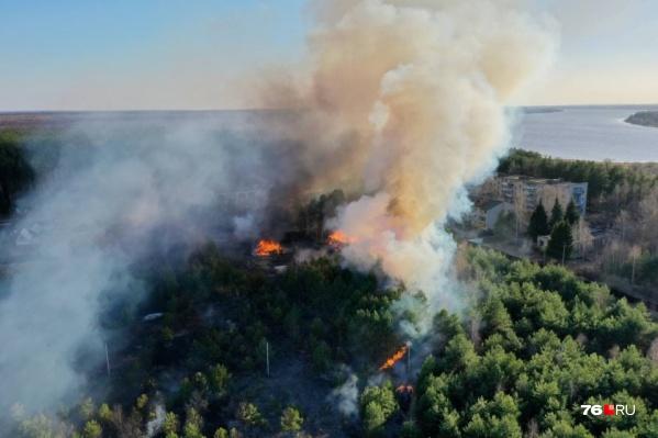Лесные пожары стали ежегодным бедствием для Ярославской области. Каждое лето на борьбу с ними регион тратит немалые силы и средства, а экономический ущерб исчисляется миллионами рублей