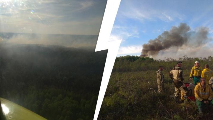 За сутки площадь лесных пожаров в Югре уменьшилась в 312 раз