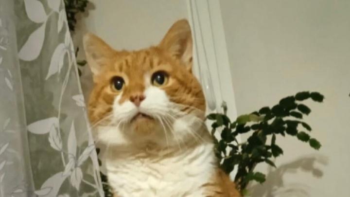 Останки кота Кузи направили на экспертизу: это решит, быть ли уголовному делу и реальным срокам