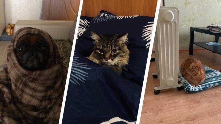 Милота дня: екатеринбуржцы показали, как их котики и песики спасаются от холода