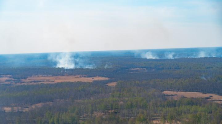 Омичам еще три недели нельзя будет ходить в лес из-за пожаров
