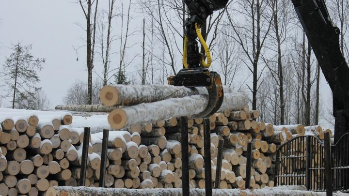 Позволяет сохранить лес: в ПЦБК рассказали о цифровых технологиях заготовки и переработки древесины