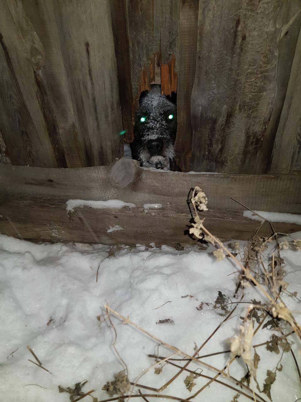 Сколько дней пес провел на морозе без еды и воды, точно неизвестно