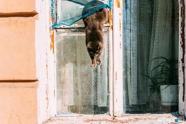 От жары в квартирах сейчас изнывают и люди, и животные