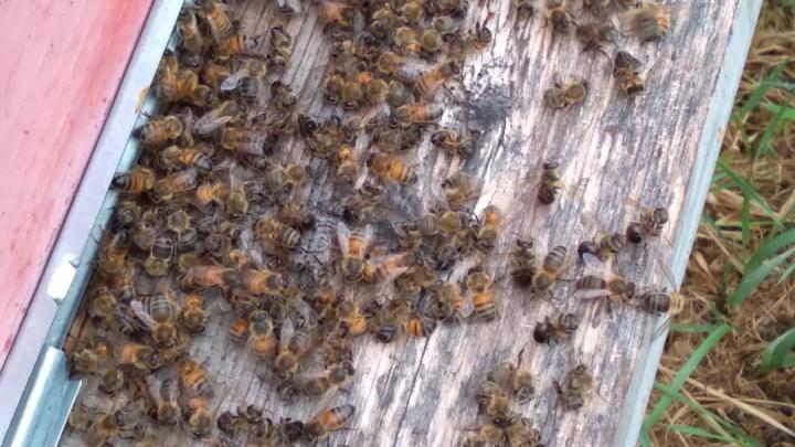 Уральцы требуют от бизнесмена семизначную сумму за убийство десятков миллионов пчел