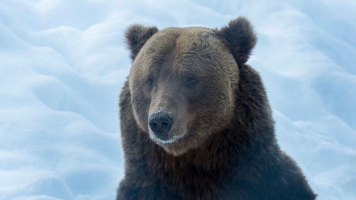 Вишерский заповедник показал, как выглядит дом после визита медведя-шатуна. Фото