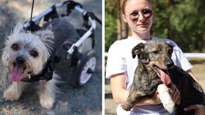Собаки-инвалиды и без породы: в Челябинске прошел фестиваль гуманного отношения к животным. Посмотрите, как это трогательно