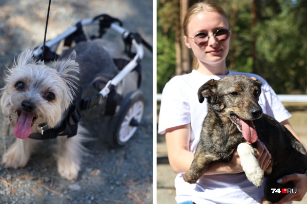 Фестиваль гуманного отношения к животным прозвали самым добрым за неординарную концепцию