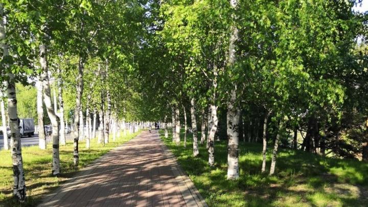 Успеть за три дня: парки Сургута останутся без финансирования, если жители не проголосуют