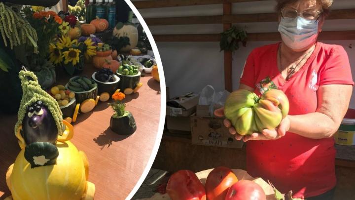 Тыква на 12 кг и килограммовый огурец: садоводы Красноярска померились огромными овощами