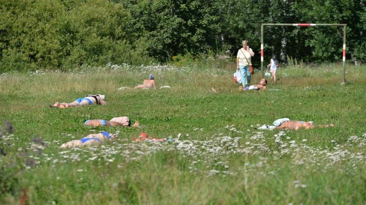 В Зеленой Роще будут косить траву двенадцать раз за сезон