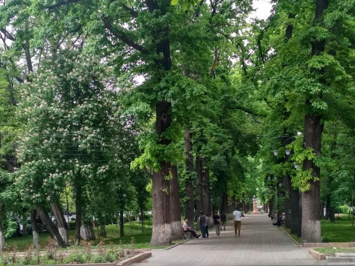 Могучие деревья в дубовой роще