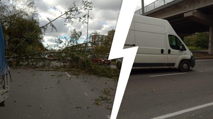 «Перегорожено движение полностью»: на выезде из Екатеринбурга тополь рухнул на авто