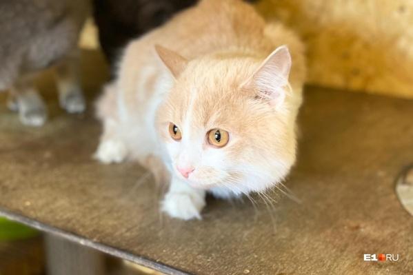 Оставленного пассажиркой кота назвали Кольцов