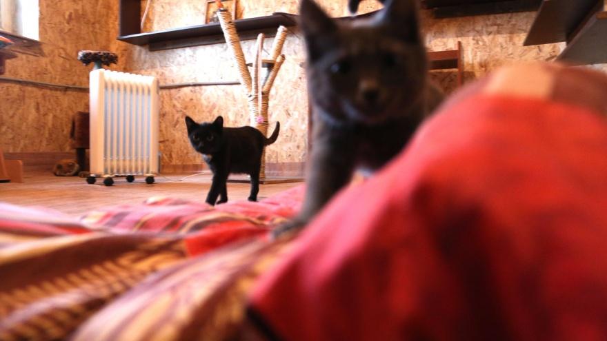 Госдума рассмотрит законопроект башкирских депутатов об обязательном чипировании собак и кошек
