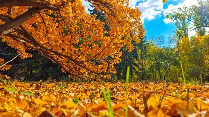 Бегом гулять! Любуемся фантастически красивыми снимками из осеннего Ботанического сада