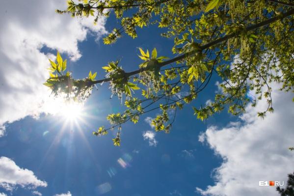 В ближайшие дни омрачать погоду будет только пожароопасный режим в Свердловской области