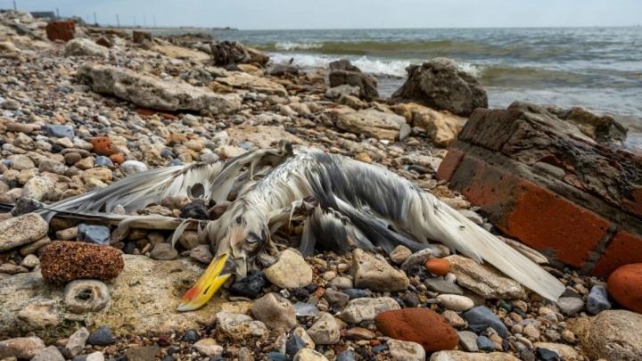 Росприроднадзор не смог назвать причину массовой гибели животных под Ейском, потому что не нашел их