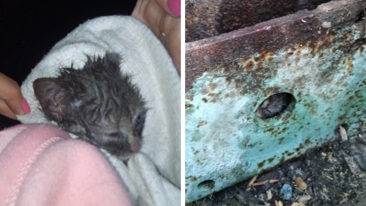 В Екатеринбурге зооспасатель вытащил из металлической балки котенка, просидевшего в западне трое суток