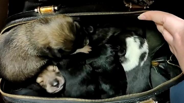В Екатеринбурге на остановке нашли сумку с новорожденными щенками