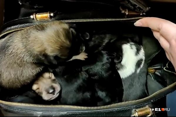 В сумке нашли семерых щенят