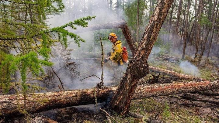 Лесные пожары в Тюменском районе должны ликвидировать в течение суток