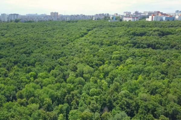 Парк 60-летия Советской власти — огромная зеленая зона