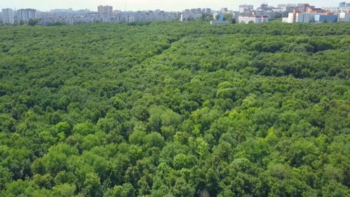 В мэрии Самары прокомментировали решение суда о землях Парка 60-летия Советской власти