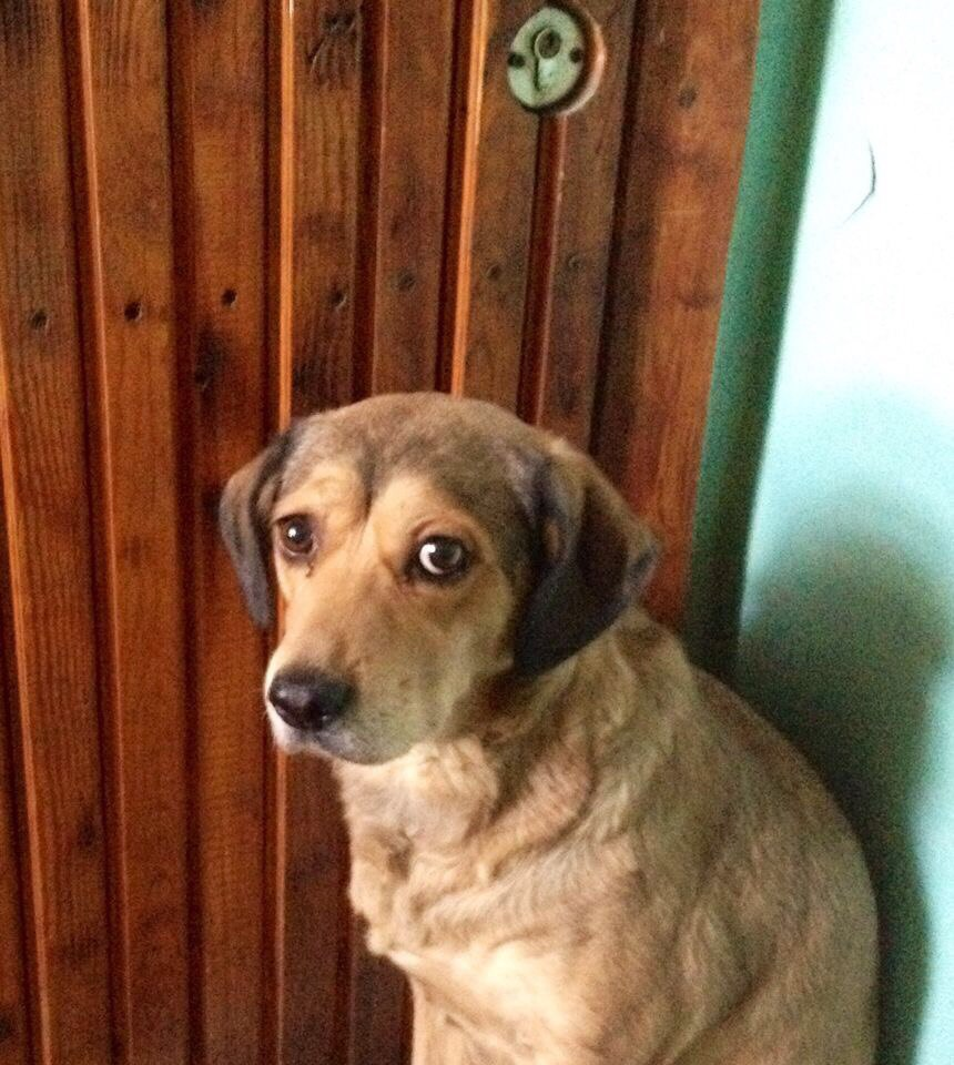 Верная собачка  три дня охраняла умершего владельца