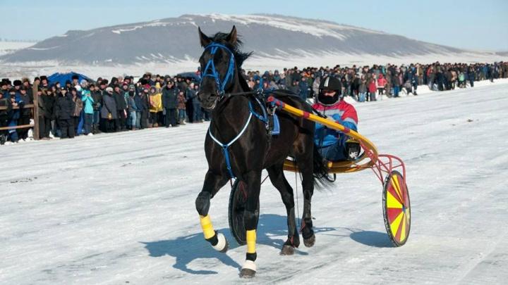 На льду Красноярского водохранилища прошли скачки