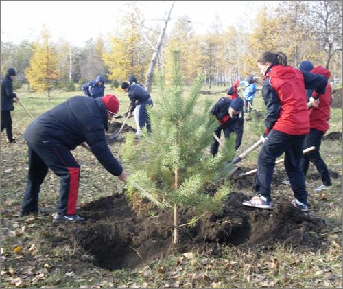ВВоронеже могут бесплатно высадить тысячи деревьев