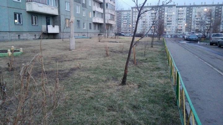 10 признаков настоящей весны в Красноярске