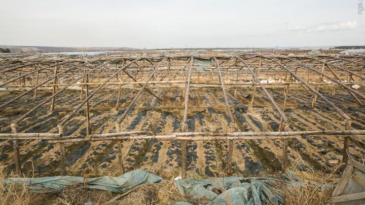 Под теплицами в районе Ермолаево земля признана опасной для выращивания овощей