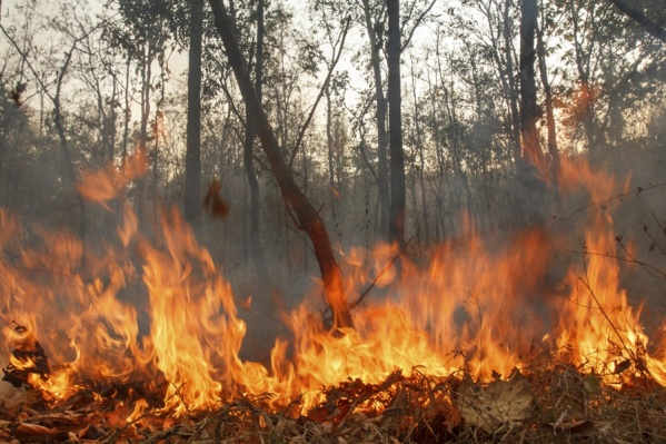 Режим был введен из-за лесных пожаров