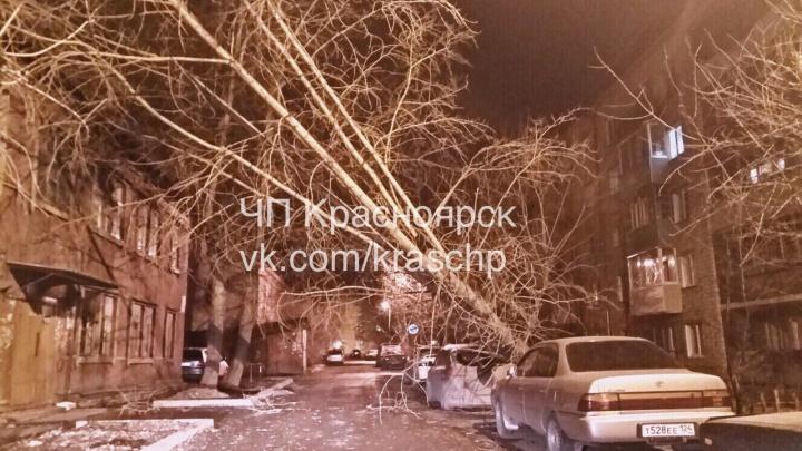 Ураганный ветер ночью повалил дерево на иномарку у парка Гагарина