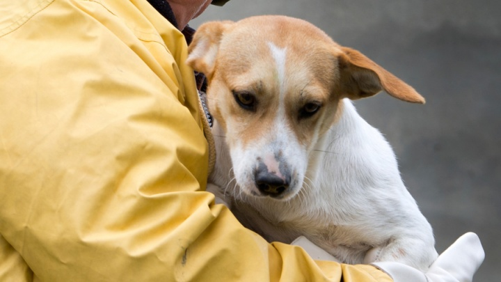Спасатели вытащили застрявшего под пачкой бруса щенка