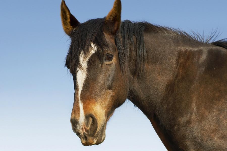 ВКузбассе лошадь завалила иукусила 11-летнюю девочку