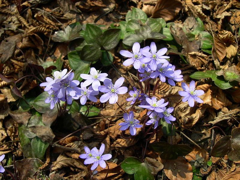 ВНижегородской области усилят контроль заторговлей первоцветами