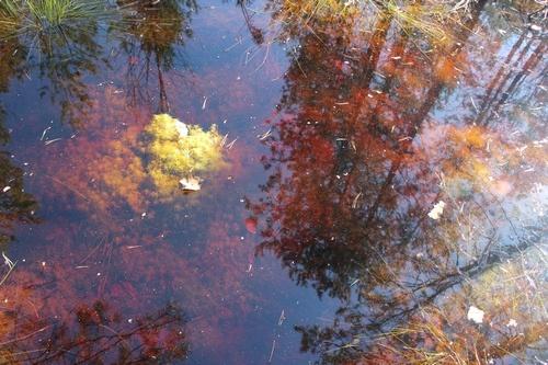 Оживший герб, прогулки по воде и неприкосновенная брусника. Чем живёт Керженский заповедник