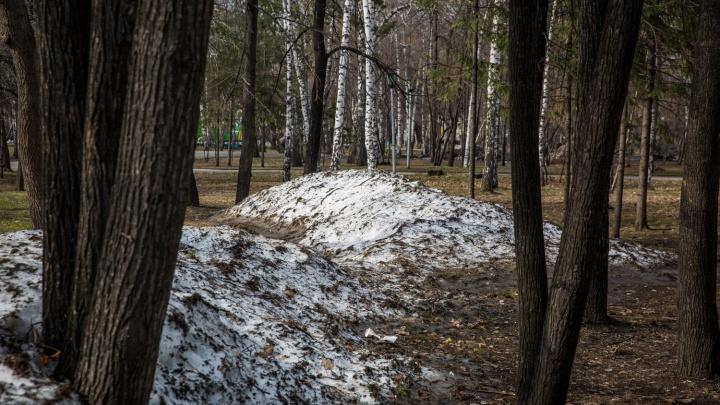 На улицах Новосибирска срубят 600 деревьев