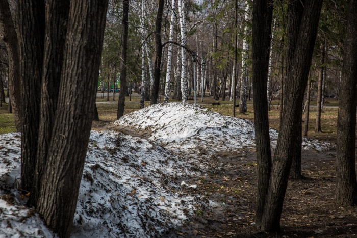 Власти нашли в городе шесть сотен деревьев, которые нужно снести