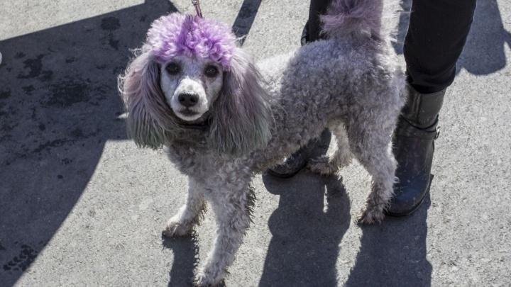 Модные собаки помогли собрать деньги для бездомных