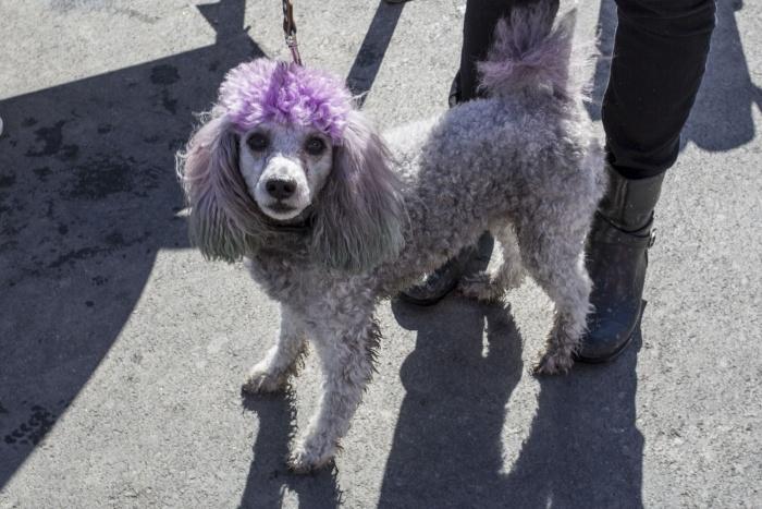 Породистые домашние собаки помогают бездомным псам