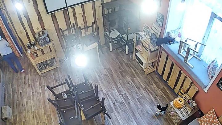 В Новосибирске поставили веб-камеру для наблюдения за семью красивыми котами