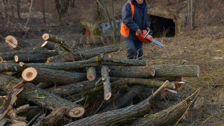 Пошли по дрова