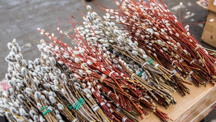 В Новосибирске начали продавать вербу с красной корой