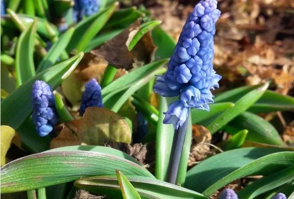 В ботсаду расцвели красивые цветы и показались первые пчелы