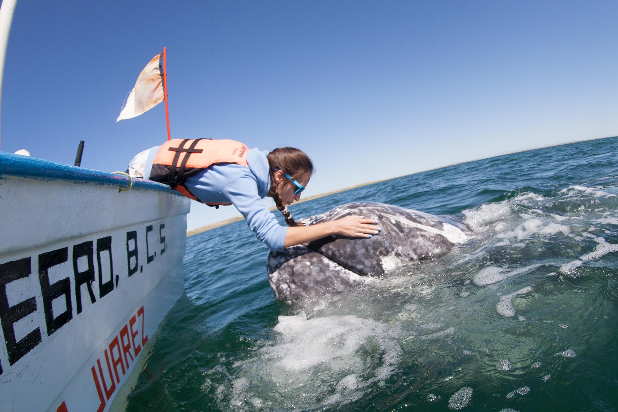 Общение с китом